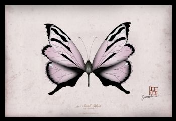 Signed A4 Butterfly Prints